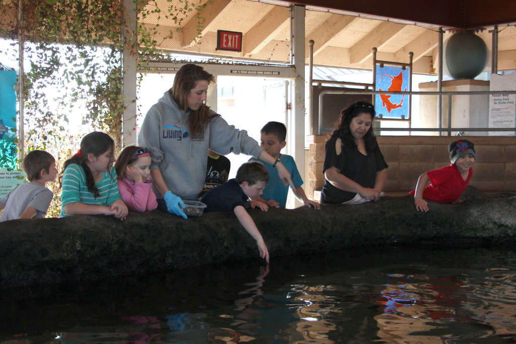 Touching Pool - Living Coast Discovery Center