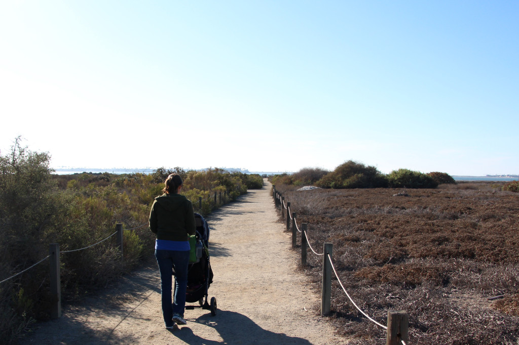 Trail to the Bay - Living Coast Discovery Center
